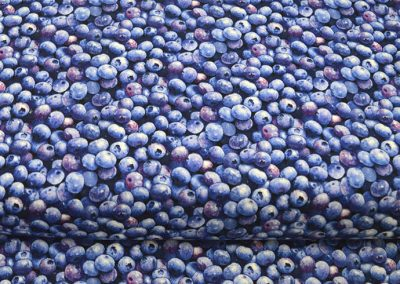 Elizabth's Studio -Blueberries